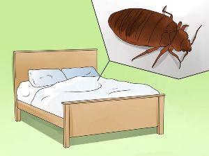 Как убирать квартиру после дезинфекции от клопов