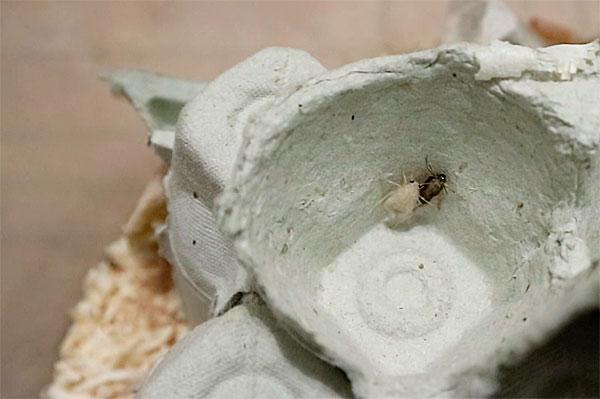 Разрушаясь, эти покровы смешиваются с пылью и вызывают аллергии у многих людей.