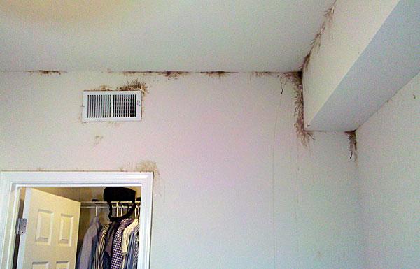 Такое случается очень редко и только в самых зараженных квартирах.
